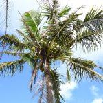 お金をかけずにグアムを満喫!!ヒルトン前ビーチ・イパオビーチとグアムのショッピング