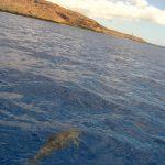 格安ハワイ旅行 野生のイルカに遭遇 イルカと私