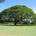 【格安ハワイ旅行】 リムジンでハワイの観光地をめぐる旅